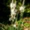 Jeli arborétumban készült fotók májusban 19