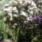 Jeli arborétumban készült fotók májusban 21