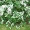 Jeli arborétumban készült fotók májusban 25