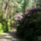 Jeli arborétumban készült fotók májusban 7