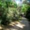 Jeli arborétumban készült fotók májusban 8
