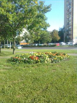 Jereván virágoskert Juharfa u
