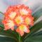 Most virágzó növények 1