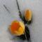 Most virágzó növények 2