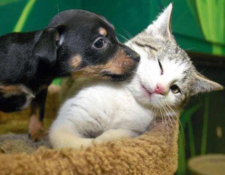 Na,adjál már egy puszit!