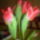 Tavasz a lakásban