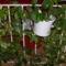 nappali korlátján futófilodendró