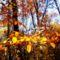 Novemberi napsütés