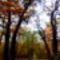 Sötét erdőben