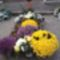 Halottak napja 2012. - Lipót atya sírja
