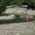 Lacziné Marika képei  -  a Duna természetvilága