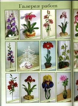 Gönyg virágok borító