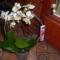 orchidea körbe