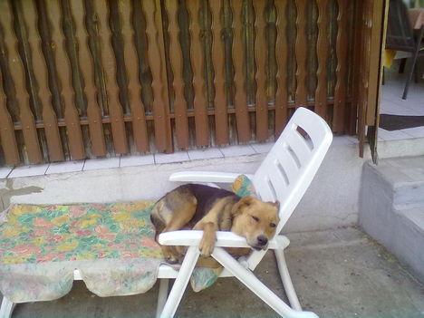 Lilike pihenés közben