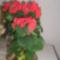 Töltött mikulás virágom