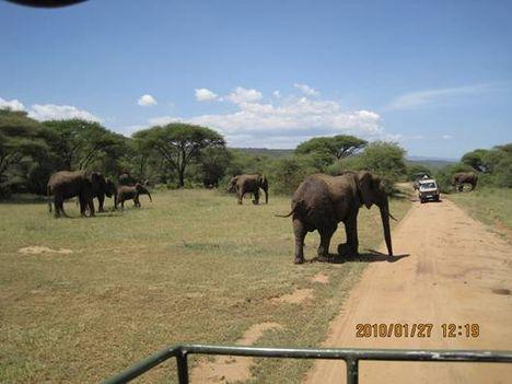 image013 elefántok