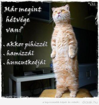 dicsak-macsek