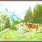 Sógórék tehenei