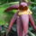 Nyiregyhazi_arboretum_1588183_9587_t