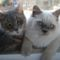 Albi és Muffin, a két kiscicám
