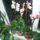 Orchideak_1592124_3581_t