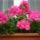 Egyedné: cserére, eladásra szánt növényeim egy része - idegen képekkel