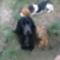 A Spániel, a Beagle és az Utcai Vegyes
