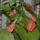Lacziné Marika képei  -  szobanövényeim