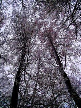 Zemplén hegység  -  fák ölelésben