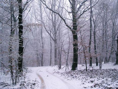 Zemplén hegység  -  havas erdő