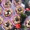 Mogyoró krémes virágok