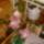 Orchideam_1598141_2275_t