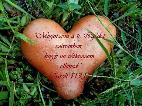 Minden féltett dolognál jobban õrizd meg szívedet! (Péld 4, 23)  Kertjeinket és házunkat ugyancsak védjük. Az ember szíve is kert, ahol a mennyei kertész nemes növényeket akar felnevelni. De sok a veszélyes kártevõ is. Szívünk házhoz is hasonlít, amelyben