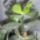 Kaktuszom-001_15686_085694_t