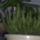 Kaktuszom_15684_139714_t