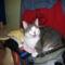 Macskák00019 másolata