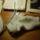 Sue53 zoknijai