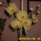 harisnya virágaim 236