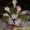 harisnya virágaim 242