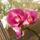 Eszter orchideái
