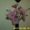 harisnya virágaim 235