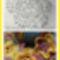 Virág és mintája
