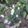 Wenhardtné Kriszti virágai