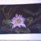 Fotó0026  Lótusz virág
