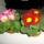 Kőszeginé Maca virágai