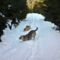A két nagy is nagyon élvezi a havat