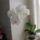Molnár Veronika virágai