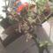 Polcomon lévő virágaim :)