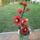 Teri virágai