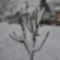 Tél Rábapordány  1